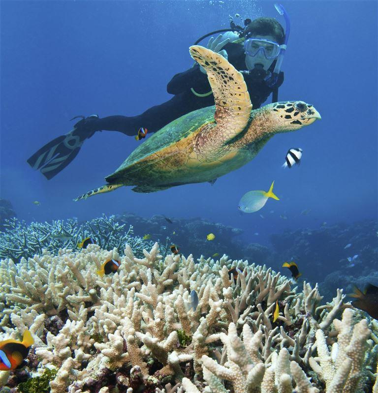 Das Great Barrier Reef Australien | Inseln, Städte, Touren
