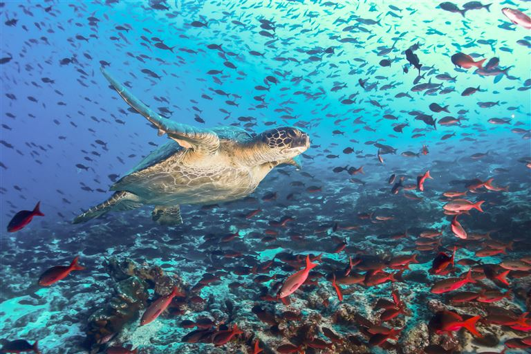Lebenstraum Galápagos-Inseln